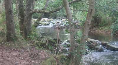 River Sid